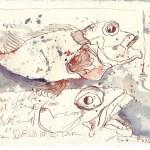 Rotbarsch - Zeichnung von Susanne Haun - 15 x 20 cm - Tusche auf Bütten