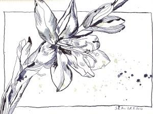 Liliengewächs indigo - Zeichnung von Susanne Haun - 17 x 22 cm - Tusche auf Bütten