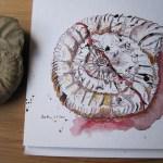 Entstehung der Zeichnung Ammonit von Susanne Haun