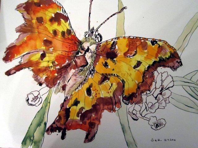 Schmetterling - Zeichnung von Susanne Haun - 30 x 40 cm - Tusche und Aquarell auf Bütten