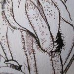 Ausschnitt Geranie Zeichnung von Susanne Haun