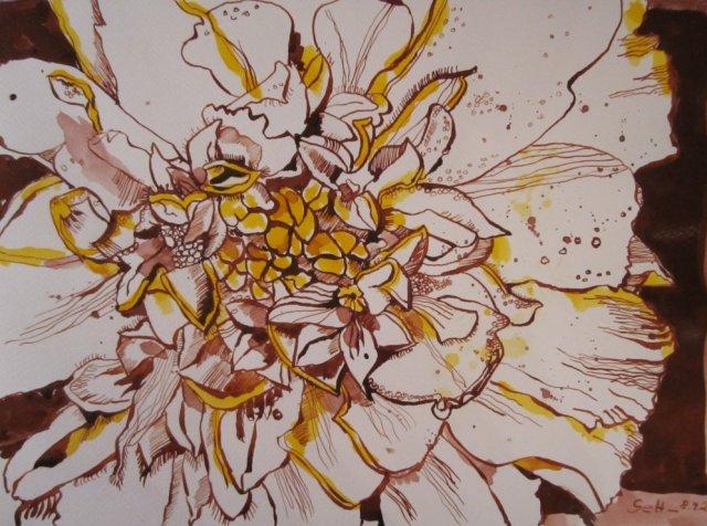 Tangetes - Zeichnung von Susanne Haun - 24 x 33 cm - Tusche auf Bütten