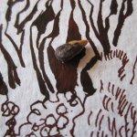 Ausschnitt Tagetes mit Sonnenblumenkern von Susanne Haun