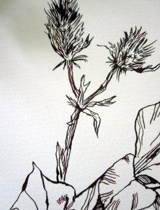Ausschnitt Ophelia Disteln Zeichnung von Susanne Haun