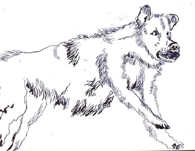 Entstehung rennender Hund - Mischung zwischen Labrador, Husky und Werwolf von Susanne Haun