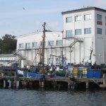 Fischerboote im Hafen von Sassnitz - Foto von Susanne Haun