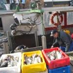 Fischer beim Arbeiten - Foto von Susanne Haun