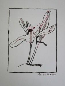 Herbstzeitlose - Zeichnung von Susanne Haun - Caput Mortem Rohrer & Klinger Antiktusche - 39 x 20 cm