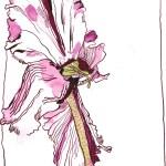 Der Tanz des Alpenveilchen 2 - Zeichnung von Susanne Haun - 25 x 28 cm - Tusche auf Bütten