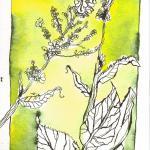 Unkraut - Zeichnung von Susanne Haun - 22 x 17 cm - Tusche auf Bütten