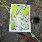 Ich male Unkraut vor dem Schloss Charlottenburg - Zeichung von Susanne Haun