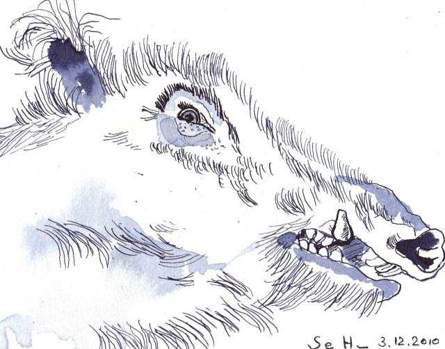 Wildschwein nach rechts schauend - Zeichnung von Susanne Haun - 17 x 22 cm - Tusche auf Bütten