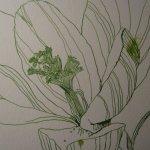 Die Blüten entstehen um den Stempel - Susanne Haun