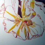 Die Form der voll aufgeblühten Tulpe entsteht - Susanne Haun