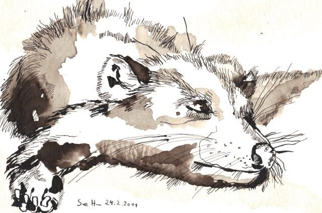 Schlafender tasmanischer Teufer - Zeichnung von Susanne Haun - 17 x 22 cm - Tusche auf Bütten