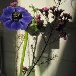 Zuhause stelle ich meine Blumen in Vasen - Foto von Susanne Haun