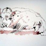Kuhjunges - Zeichnung von Susanne Haun - 18 x 25 cm - Tusche auf Bütten