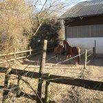 Nicht nur ich auch die Pferde geniessen die Sonne - Foto von Susanne Haun