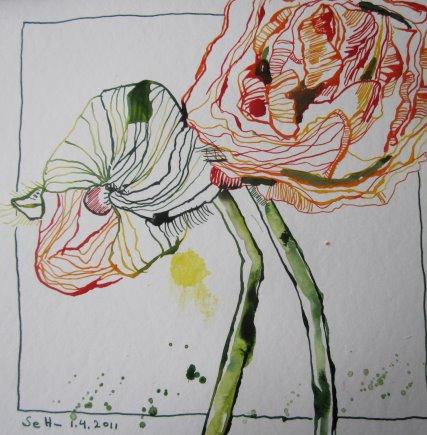 Ranunkeln - Zeichnung von Susanne Haun - 20 x 20 cm - Tusche auf Bütten