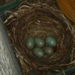Erst die Eier - Susanne Haun