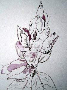 Entstehung Rhododendron Zeichnung von Susanne Haun