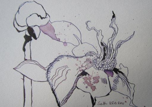 Welkende Pfingstrose Vers. 2 - Zeichnung von Susanne Haun - 17 x 12 cm - Tusche auf Bütten