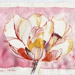 Tulpe in rot - Zeichnung von Susanne Haun - 15 x 20 cm - Tusche auf Bütten
