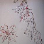Glockenblumen und Klematis im Paradies - Zeichnung von Susanne Haun - Ausschnitt aus 1000 x 40 cm - Tusche auf Bütten -