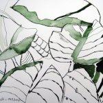 Seerosenblätter - Zeichnung von Susanne Haun - 17 x 22 cm - Tusche auf Bütten
