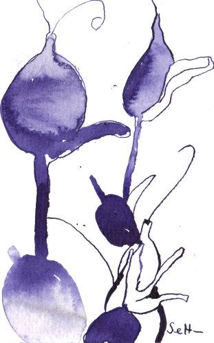 Lila/Aubergines Gewächs - Zeichnung von Susanne Haun - 10 x 15 cm - Tusche auf Bütten