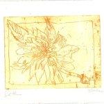 Blüte gelb - Strichätzung von Susanne Haun - 15 x 20 cm
