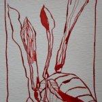 Rote Blüte 1 - Zeichnung von Susanne Haun - Tusche auf Bütten - 12 x 17 cm