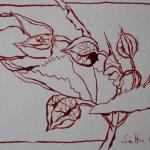 Rote Blüte 3 - Zeichnung von Susanne Haun - Tusche auf Bütten - 12 x 17 cm