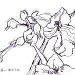 Blüten aus dem Karl Foerster Garten - Zeichnung von Susanne Haun - Tusche auf Hahnemühle Burgund - 12 x 17 cm
