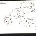 Polar Füchse - Skizze von Susanne Haun