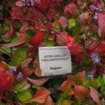 Alle Pflanzen sind liebevoll beschildert - Foto von Susanne Haun
