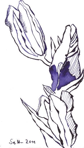 Herbstenzian Vers. 2 - Zeichnung von Susanne Haun - Tusche auf Bütten - 12 x 17 cm