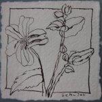 Blüte 4 - Zeichnung von Susanne Haun - Tusche auf Bütten - 10 x 10 cm