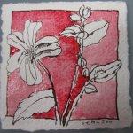 Blüte 4 karminrot koloriert - Zeichnung von Susanne Haun - Tusche auf Bütten - 10 x 10 cm