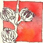Hibiskus Vers. 2 - Zeichnung von Susanne Haun - Tusche auf Silberburg - 10 x 10 cm