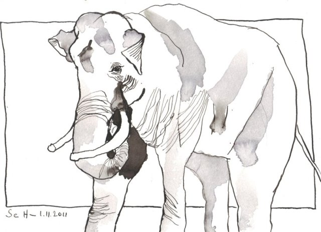Elefantenbulle - Zeichnung von Susanne Haun - Tusche auf Bütten - 17 x 22 cm