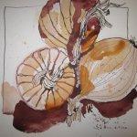 Zwiebeln - Zeichnung von Susanne Haun - Tusche auf Bütten - 25 x 25 cm