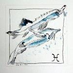 Fische - Zeichnung von Susanne Haun - 20 x 20 cm - Tusche auf Bütten