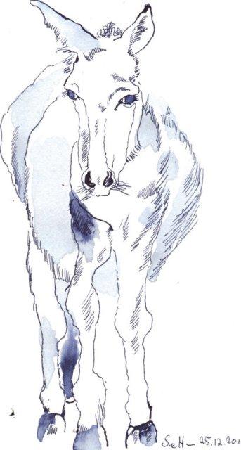 Esel - Zeichnung von Susanne Haun - 18 x 26 cm - Tusche auf Lanaquarell