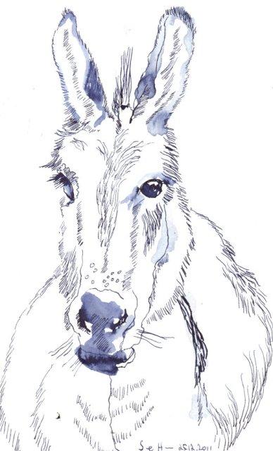 Eselskopf - Zeichnung von Susanne Haun - 18 x 26 cm - Tusche auf Lanaquarell