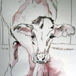 Kalb - Zeichnung von Susanne Haun - Tusche auf Bütten - 17 x 22 cm