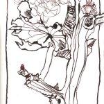 Baumwolle III - Zeichnung von Susanne Haun - Tusche auf Hahnemühle Burgund - 12 x 17 cm