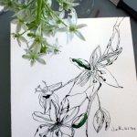 Bild und Modell - Ornithogalum,30 x 30 cm, Version 2 (c) Foto von Susanne Haun