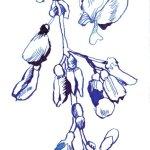 Blauregen, 17 x 13 cm, Tusche auf Bütten (c) Zeichnung von Susanne Haun (3)