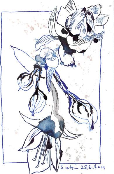 Blauregen, 17 x 13 cm, Tusche auf Bütten (c) Zeichnung von Susanne Haun